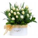 Box con 20 Tulipanes Blancos