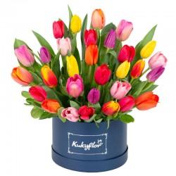 Box bajo con 30 tulipanes variados