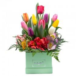 Box con 10 tulipanes variados y alstroemeria