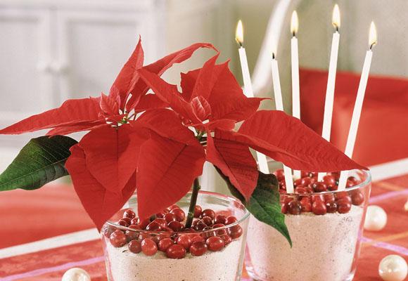 decoracin navidea con flores para un hogar de ensueo