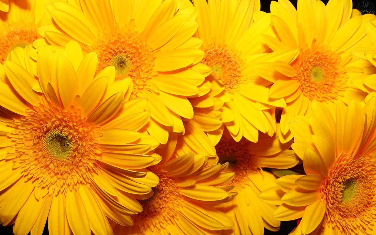 fiestas temticas ao nuevo con flores amarillas