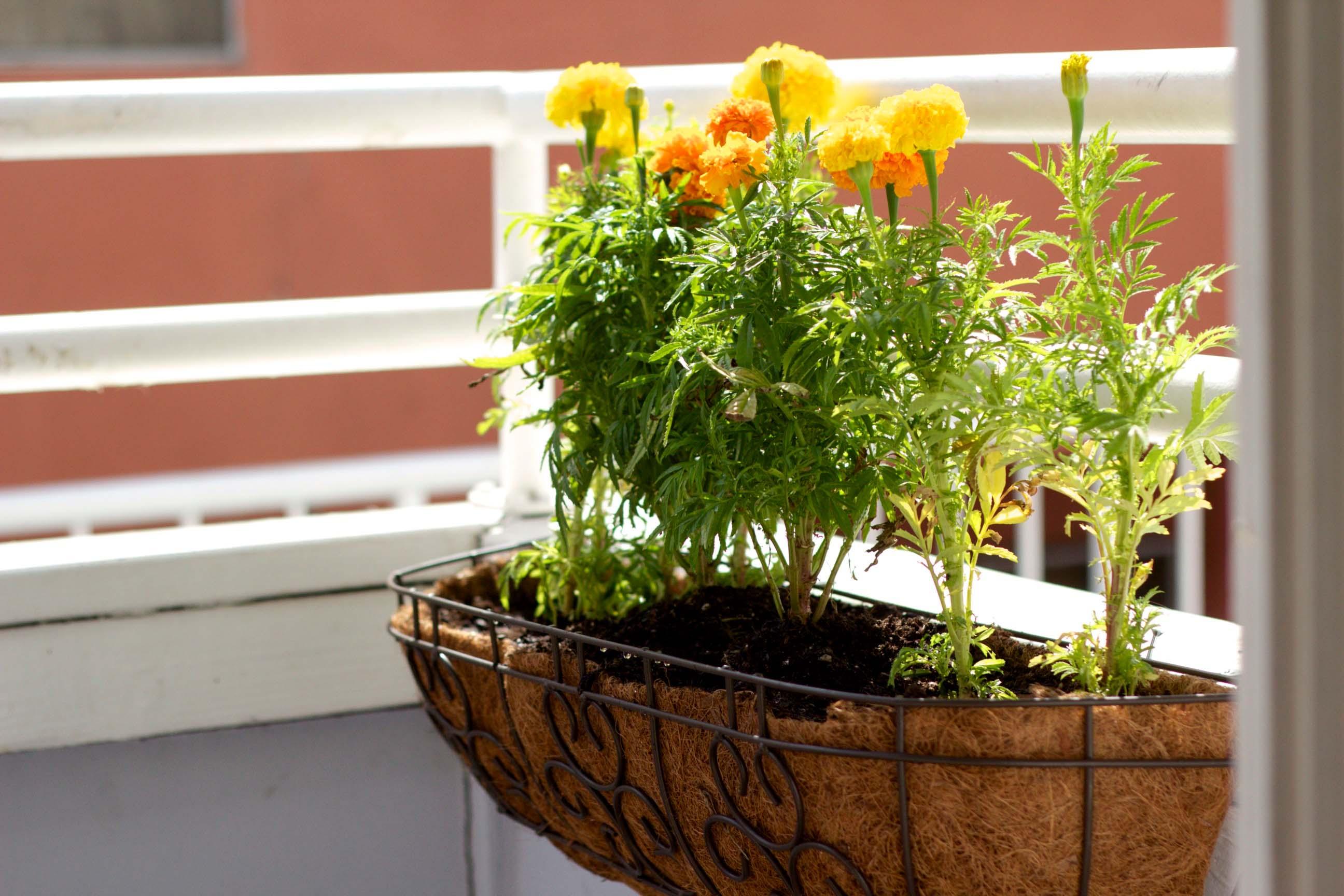 Kukyflor 5 errores comunes al decorar tu casa con flores - Macetas para balcon ...