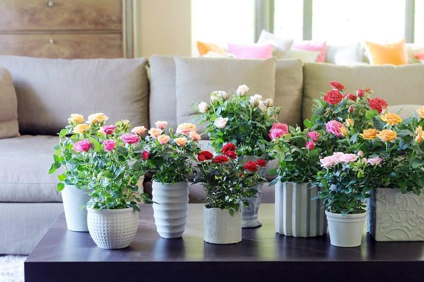 Kukyflor las tres flores m s f ciles de cuidar for Decoracion de macetas para plantas