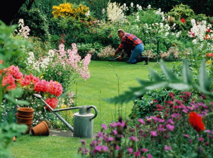 plantas jardins flores:cuidar-jardin-plantar-flores-plantas