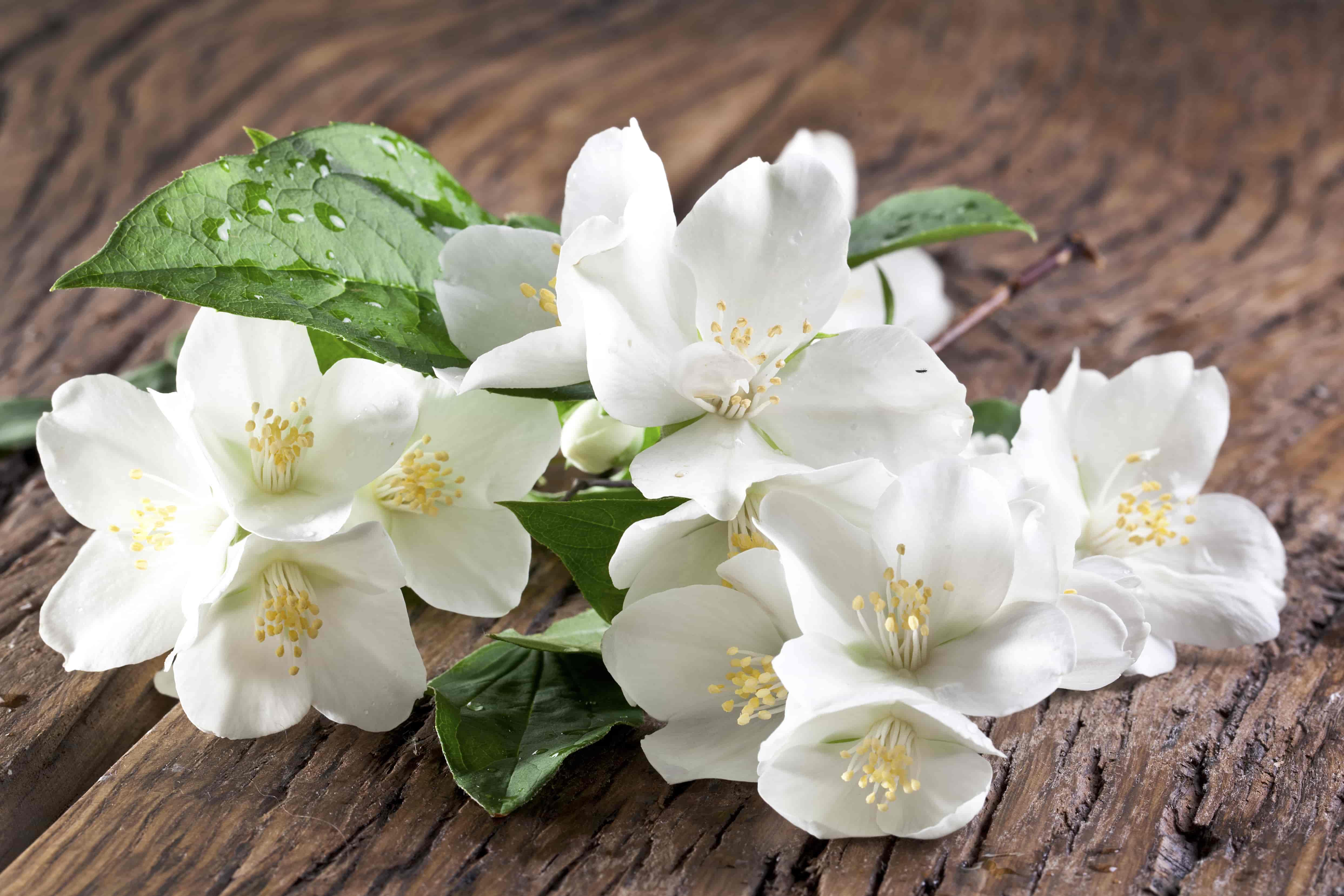 Kukyflor flores arom ticas para la casa - Ambientadores naturales para la casa ...